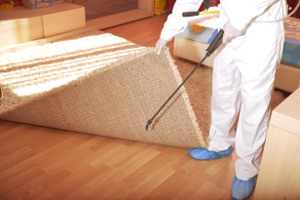 Pest control experts in London